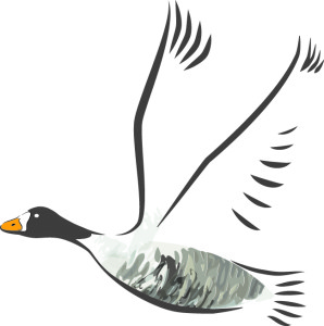 Wild Goose Week at Wexford Wildfowl Reserve @ Wexford Wildfowl Reserve